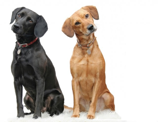 Dog Teach Puppy How To Dog